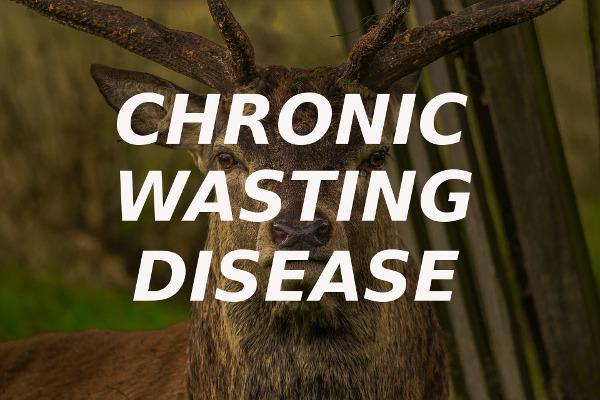 chronic wasting disease CWD