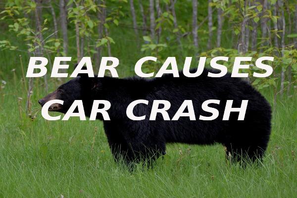bear causes car crash