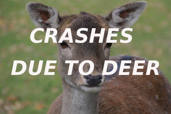 crashes deer