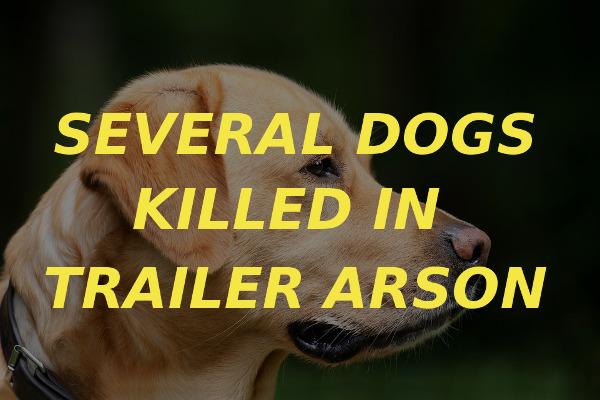 dogs killed trailer arson
