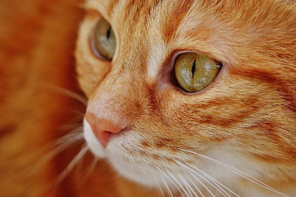 cat pet vet rabies animal