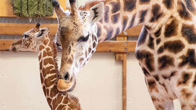 Courtesy Woodland Park Zoo