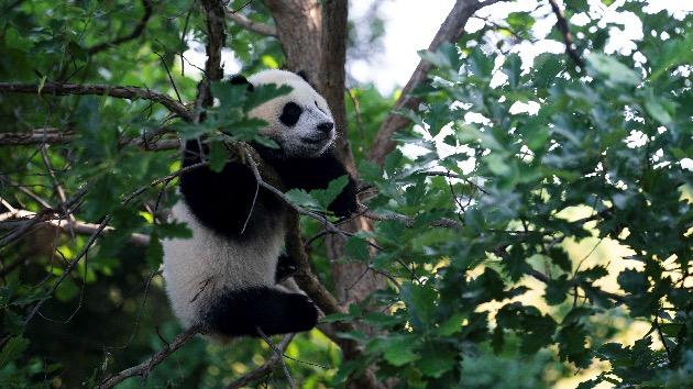 Liu Jie/Xinhua via Getty Images